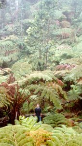 Jan in the rainforest